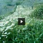 Türkiye'deki Endemik Bitkiler -1-