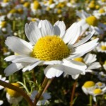 Bilge Bir Çiçeğe