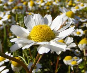 bilge-çiçek resim