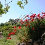 Türkiye'deki Biyolojik Zenginliğin Nedenleri