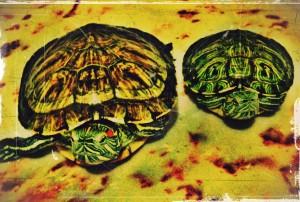 kaplumbağa 2 (2)